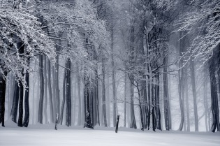 winter-trees-2