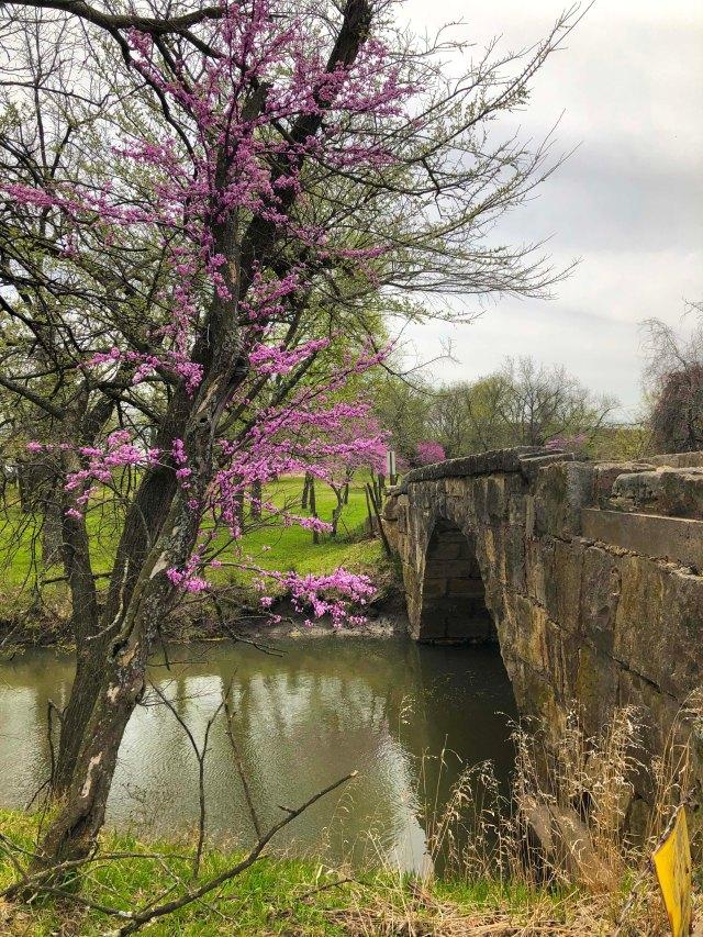 stone-bridge-red-bud