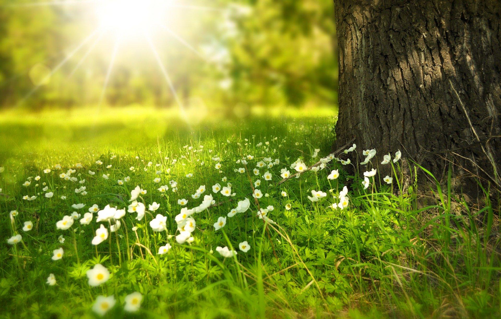 spring-field-tree