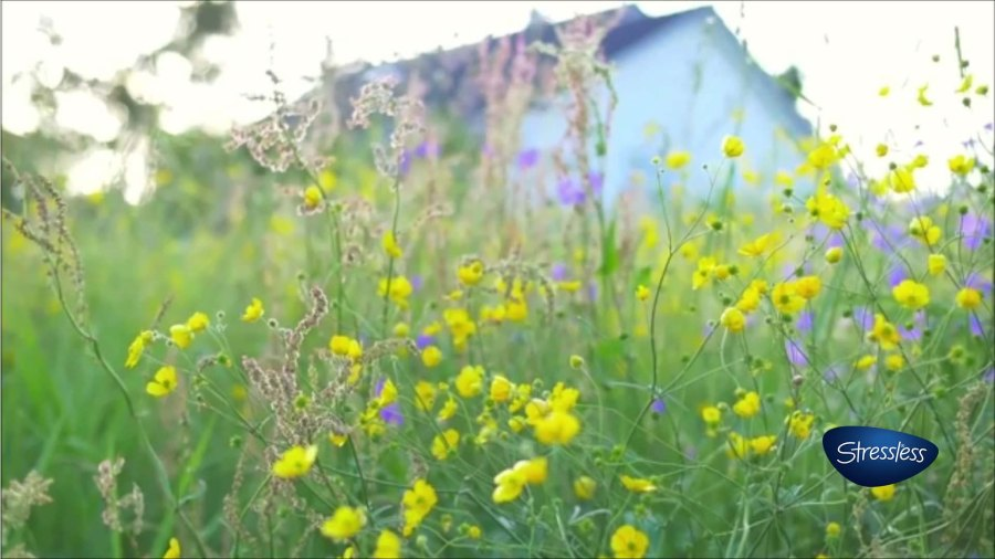 yellow field flowers house